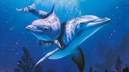 Фото: Снится дельфин – это к беременности